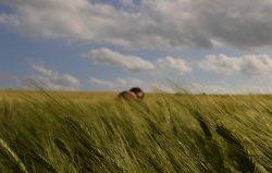 Giulia Melis_il vento dice, il vento fa 1