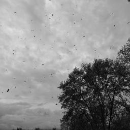 Laura Spizzichino_Fruscio delle foglie al vento 2