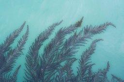 Paola Cominato_Galleggiando tra il verde e il blu4